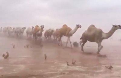 Mία ισχυρή κακοκαιρία –με ανέμους και καταιγίδες- έπληξε την  ανατολική περιοχή τη Σαουδικής Αραβίας