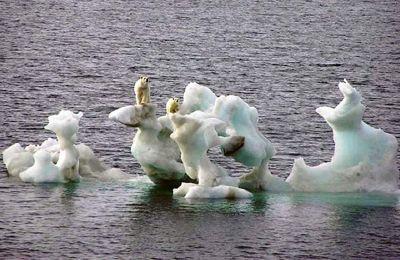 Το ποσοστό των Αμερικανών που ανησυχούν «πολύ» για την υπερθέρμανση του πλανήτη έχει τριπλασιαστεί από το 2011 και ανέρχεται στο 29%.