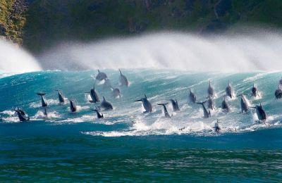 Τα δελφίνια πρωταγωνιστούν σε αρκετές σκηνές του «Oceans» μαζί με άλλα γνωστά και άγνωστα πλάσματα των ωκεανών που ζουν σε μεγάλα βάθη.