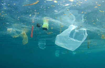 «Πρόκειται για τη μεγαλύτερη ποσότητα πλαστικού που έχει βρεθεί σε φάλαινα. Είναι αηδιαστικό» σημείωσαν.