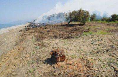 Το τμήμα Δασών αναφέρει ότι η Acacia saligna (ακακία) θεωρείται ένα από τα πιο επιθετικά εισβλητικά είδη στους φυσικούς οικότοπους της Κύπρου