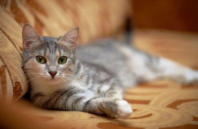 Οι γάτες που βγαίνουν σε εξωτερικούς χώρους έχουν τριπλάσιες πιθανότητες να μολυνθούν από παράσιτα ή από παθογόνους παράγοντες.