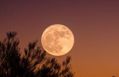 Το ροζ φεγγάρι έχει πάρει το όνομά του από το λουλούδι Wild Ground Phlox, ένα από τα πρώτα λουλούδια που ανθίζουν την άνοιξη.