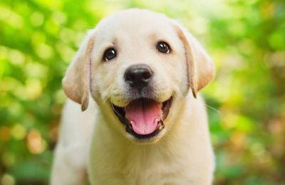 Οι σκύλοι εκπαιδεύτηκαν ειδικά και πέρασαν από «αυστηρή αξιολόγηση» για να διασφαλιστεί ότι διαθέτουν την κατάλληλη ιδιοσυγκρασία