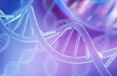 Τα κύτταρα τους λειτουργούν με νέους βιολογικούς κανόνες, παράγοντας γνωστές πρωτεΐνες αλλά με ανθρωπογενή γενετικό κώδικα.