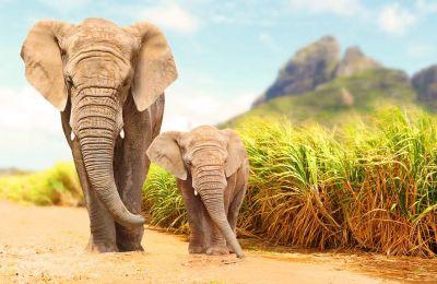 Οι άνθρωποι έχουν ήδη εξαφανίσει τα περισσότερα μεγαλόσωμα ζώα που ζούσαν σε όλες τις ηπείρους της Γης, με εξαίρεση μέχρι σήμερα την Αφρική