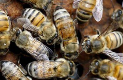 Οι πυροσβέστες ζήτησαν τη βοήθεια ενός μελισσοκόμου που βρισκόταν σε κοντινή απόσταση