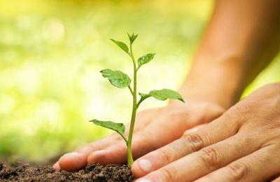 Σύμφωνα με τη μελέτη, περίπου τα δύο τρίτα της ξηράς του πλανήτη μπορούν σήμερα να στηρίξουν δένδρα