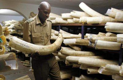 Τα παράνομα αντικείμενα ήταν κρυμμένα σε κοντέινερ που υποτίθεται ότι περιείχαν ξυλεία και προορισμό το Βιετνάμ.