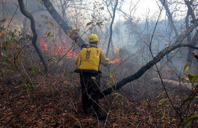 Οι πυρκαγιές, που μαίνονται επί έναν μήνα, έχουν απανθρακώσει περίπου 10 εκατομμύρια στρέμματα δάσους και βοσκοτόπων