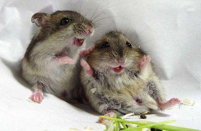 Έμοιαζαν αληθινά χαρούμενα όταν έβρισκαν τους νευροεπιστήμονες που έπαιζαν μαζί τους
