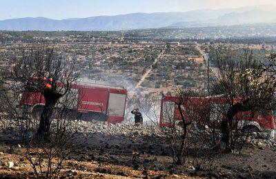 Συνολικά επιχειρούν 169 πυροσβέστες με 24 οχήματα και 15 ομάδες πεζοπόρων τμημάτων, και από αέρος τέσσερα αεροσκάφη και έξι ελικόπτερα