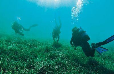 Δύτες σε ρόλο κηπουρών προχωρούν σε επαναφυτεύσεις σε θαλάσσια λιβάδια ποσειδωνίας στην ευρύτερη περιοχή των Δωδεκανήσων.