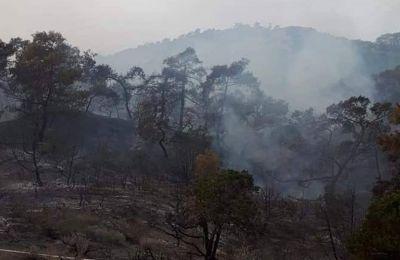 Στην πρόσφατη πυρκαγιά κάηκαν 70 εκτάρια πυκνής πευκόφυτης έκτασης εντός του Κρατικού Δάσους του Ακάμα. Οι αρχές αναζητούν τον ή τους ενόχους ενός περιβαλλοντικού εγκλήματος.