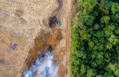Η επιφάνεια του δάσους η οποία αποψιλώθηκε είναι η μεγαλύτερη από το 2008, όταν είχαν χαθεί 12.287 τετραγωνικά χιλιόμετρα μέσα σε 12 μήνες.