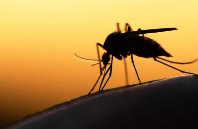 Παράλληλα, η κλιματική αλλαγή διευρύνει την ακτίνα δράσης των κουνουπιών σε ολοένα βορειότερα γεωγραφικά πλάτη.