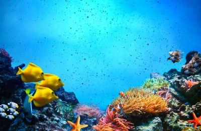 Σε ύδατα φτωχά σε οξυγόνο, οι μέδουσες και οι σουπιές επιβιώνουν καλύτερα σε σχέση με τα ψάρια.
