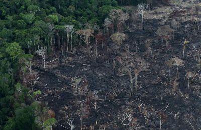 Η αποψίλωση των δασών συνήθως επιβραδύνεται τους μήνες του Νοεμβρίου και του Δεκεμβρίου, κατά την περίοδο των βροχών στον Αμαζόνιο.