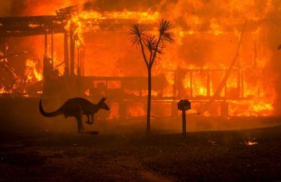 Εικοσιτέσσερις άνθρωποι έχασαν την ζωή τους, ενώ αφανίστηκε τεράστιος αριθμός ζώων.