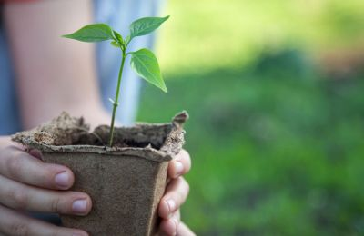 Φύτευση 1,500 δέντρων από τον Δήμο Αθηένου