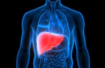 Το επίτευγμα μπορεί να αυξήσει σημαντικά τον αριθμό των διαθέσιμων οργάνων για μεταμόσχευση.