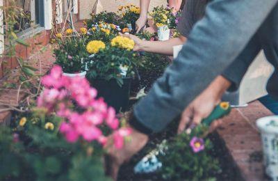 Εμείς προτείνουμε μερικά δικά μας αγαπημένα είδη λουλουδιών που θα φέρνουν την άνοιξη στην καρδιά σου.