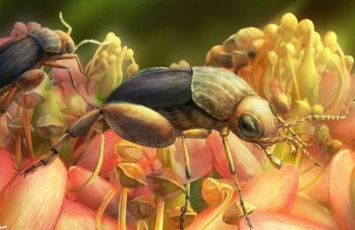 Οι αυξήσεις στα ξενικά είδη αναμένονται μεγαλύτερες στα έντομα και στα άλλα αρθρόποδα