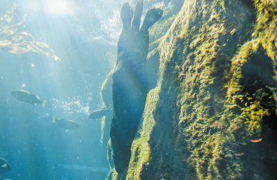 Η υπερθέρμανση έχει επηρεάσει το σύνολο της υδάτινης μάζας των ωκεανών και όχι μόνο τα επιφανειακά ύδατα, τα οποία θερμαίνονται πιο γρήγορα