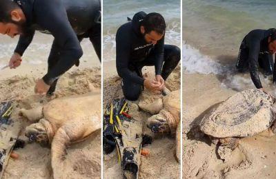 Ερασιτέχνης ψαράς βρήκε χελώνα, την οποία εντόπισε, παγιδευμένη σε δίκτυα στον ποταμό του Λιοπετριού.