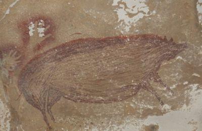 Είναι η πρώτη φορά που μάτια Δυτικών είδαν την εικόνα με τα ζώα στο σπήλαιο. Αλλά και οι ντόπιοι δεν είχαν μάθει για την ύπαρξη του σπηλαίου έως το 2017, όταν ανακαλύφθηκε (ΦΩΤΟ: Maxime Aubert)