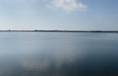 Μενεού: Σε υπέροχο υγροβιότοπο μετατρέπονται οι λίμνες ανακυκλωμένου νερού του ΣΑΛ