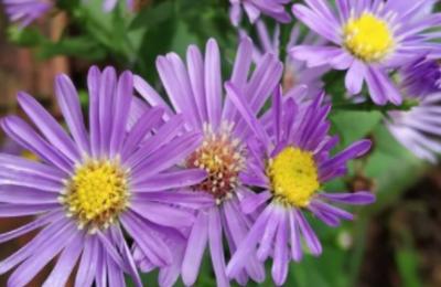Η φωτογραφία ενός μωβ λουλουδιού με την ασυνήθιστη επισκεψιμότητα