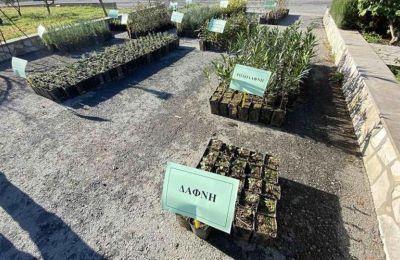 Τμήμα Δασών - Προσφέρει χιλιάδες δωρεάν δενδρύλια, θάμνους και αρωματικά φυτά