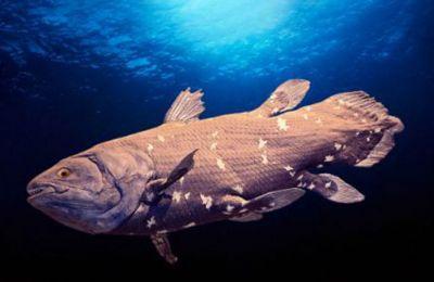 Το ψάρι που μπορεί να ζήσει μέχρι και 100 χρόνια